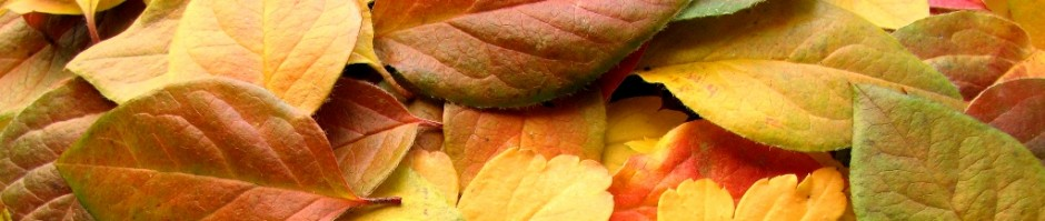 cropped-leaves1.jpg