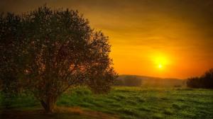 nature_dawn[1]