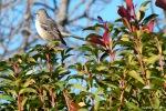 Bird at my house e