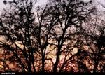 TX Winter Sunset 2
