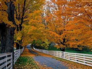 fall-wallpaper-8[1]